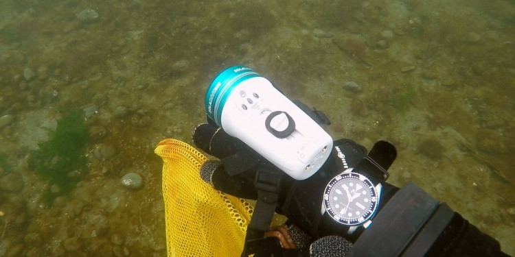 The Seiko SKX007 dive watch underwater