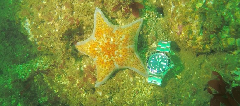 Orient Ray II Review - Diving with Starfish